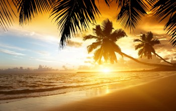 summer,palm,tropical,paradise,Sunset,ocean,тропики,beach,sand,coast