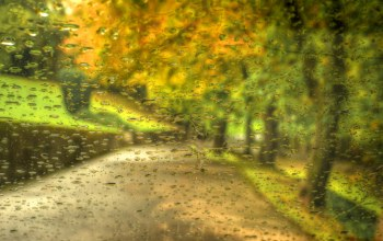 park,leaves,walk,drops,rain,autumn,forest,trees
