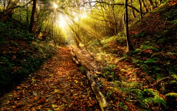 path,view,Color,Sunset,leaf,rays,sky,clouds,forest,autumn,grass