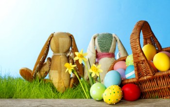 bunny,sunshine,Easter,spring,eggs,meadow,daffodils,grass,Rabbit
