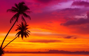 scenery sunset ,beautiful red sky,Tropical beach,palm trees,clouds,landscape,ocean