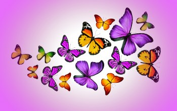 Purple,Design by marika,butterflies,colorful