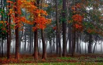 mist,forest,autumn