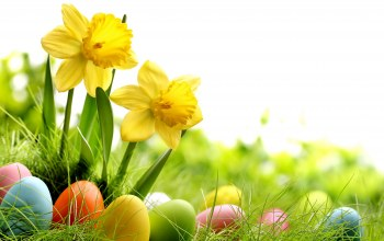 spring,daffodils,Easter,луг,eggs,meadow,grass,Весна,sunshine