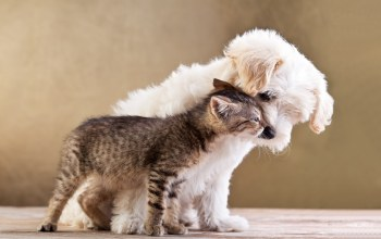 small dog and cat together,puppy,kitten,Друзья,friends