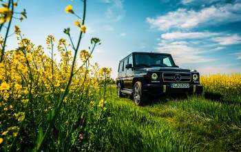 grass,summer,sky,g63,car