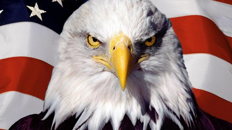 america the champion of democracy Unlike most editing & proofreading services, we edit for everything: grammar, spelling, punctuation, idea flow, sentence structure, & more get started now.