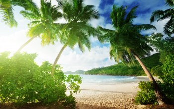 sand,beach,tropical,vacation,paradise,лето,summer,palms