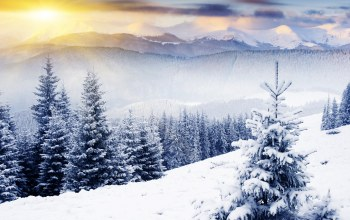 winter,mountains,snow,sunlight,солнечные лучи,ёлки,trees