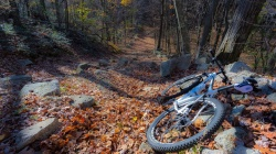bike,tree,path,forest,autumn,leaves