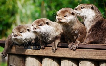 forest,branch,wild,otters,animals,cute