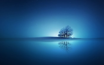 stars,tree,sky,blue,reflection