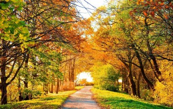 Road,tree,autumn,leaves
