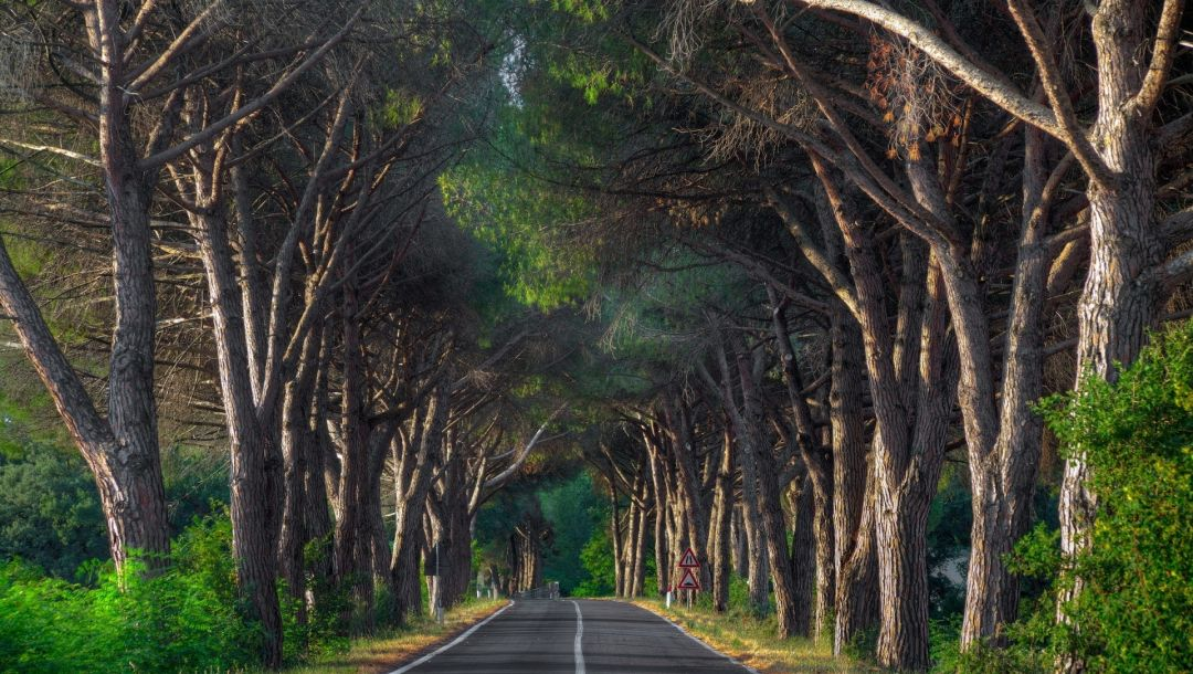 Road,woody,tree,forest