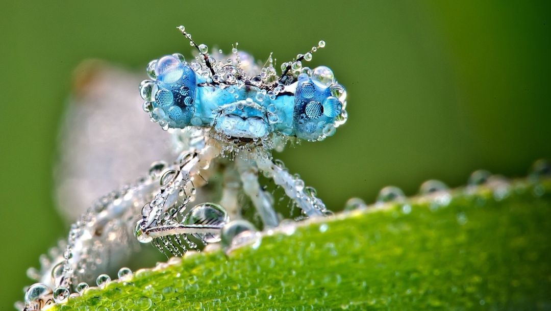 drops,water,Dragonfly