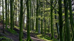 forest,tree,green,path,nature