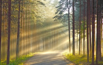 forest,light,tree,sunlight
