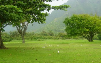 grass,tree,Birds,mountain