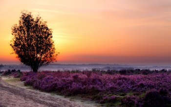 flower,Purple,tree,fields