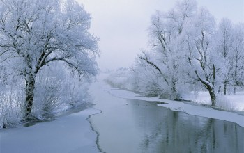 tree,river,ice,snow,winter