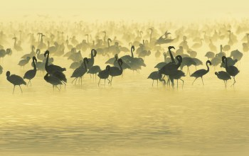 Вода,africa,африка,Studying,flamingos,south