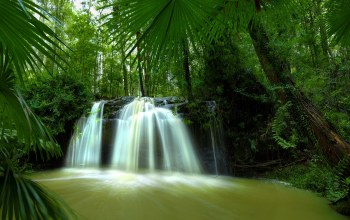 river,tree,forest,waterfall