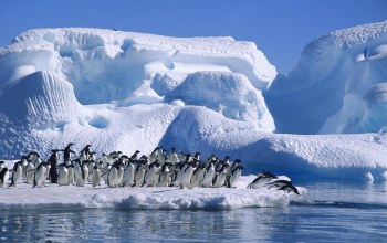 water,wild,snow,ice,penguins