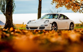 sky,White,foliage,911,autumn,porsche,911,tree
