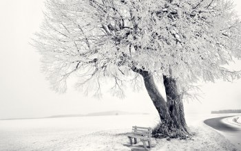 snow,sky,ice,tree,bench,winter