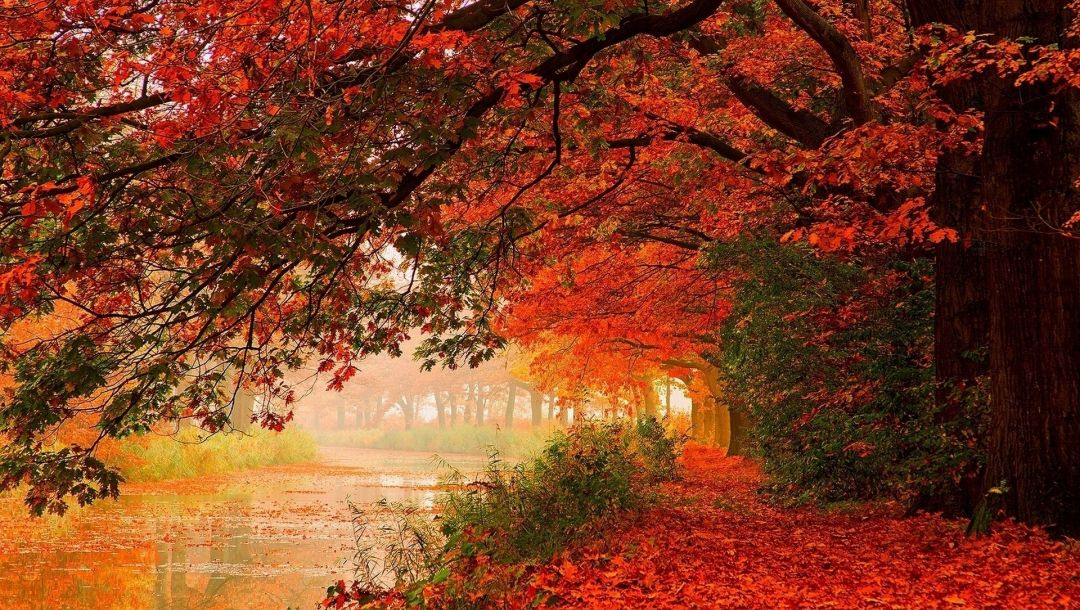 leaves,tree,autumn,water,river
