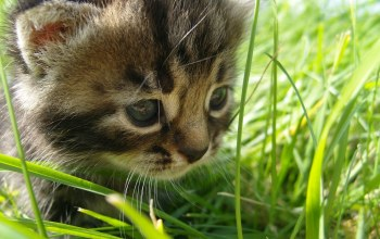 grass,cat,in,baby,the