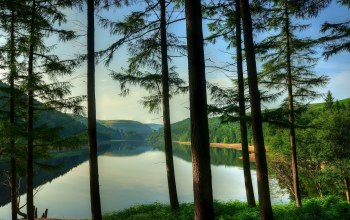 tree,blue,sky,mountain,forest,water