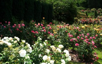 Portland's International Rose Gardens,Вашингтон Парк