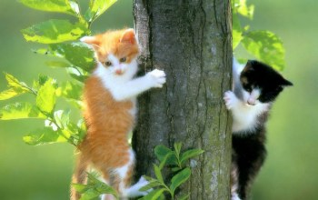 tree,kittens,leaves,Cats