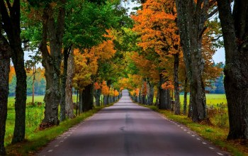 Road,leaves,colors,autumn,tree