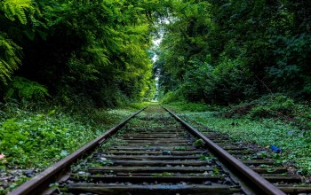 tree,forest,Railroad