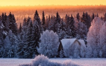 Cottage,tree,house,snow,winter