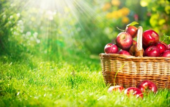 grass,apple,basket,sunlight