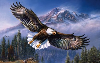 wld,mountain,eagle,sky,wind