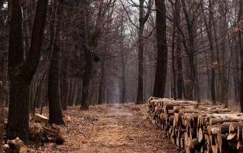 lumber,path,wood,trail,forest,trees