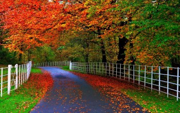 tree,fence,yellow,leaves,clors,autumn,Road