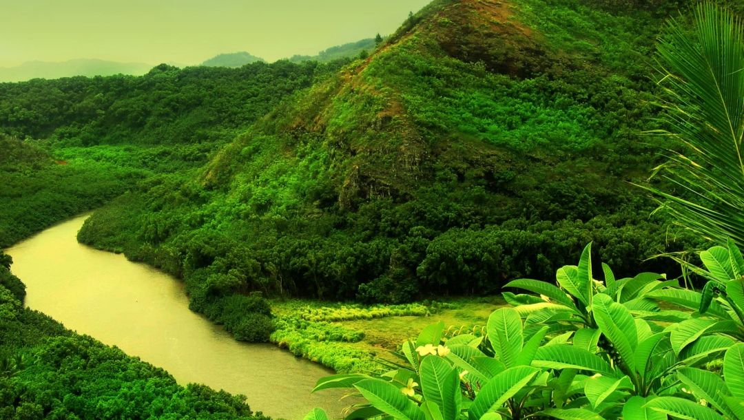 mountain,forest,river,water,tree