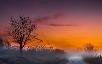 sky,Road,Purple,tree,morning,tree,mist