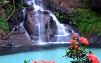leaves,waterfalls,Red,rock,tree,forest,flower