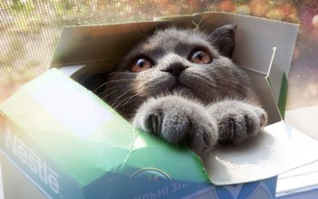 box,cute,Kitty,cat