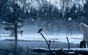 trees,Owl,wolf,forest,wild,snow,ice