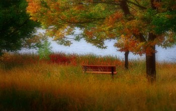 autumn,bench,leaves,colors,mountain,trees,grass