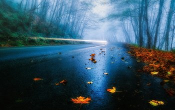 leaves,tree,Road,mist