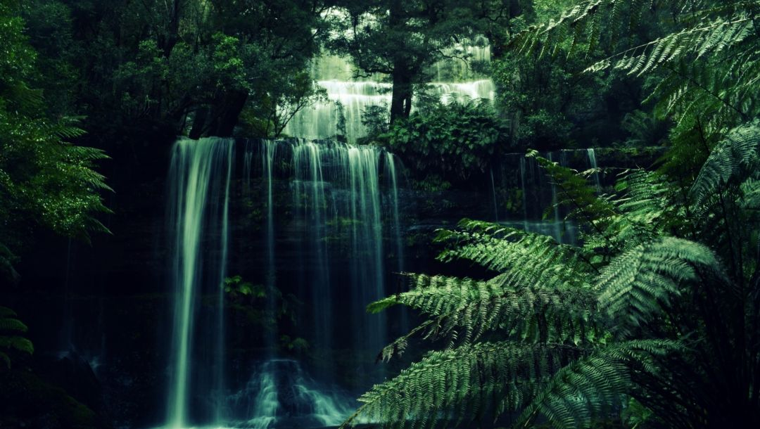 water,waterfall,river,tree,forest