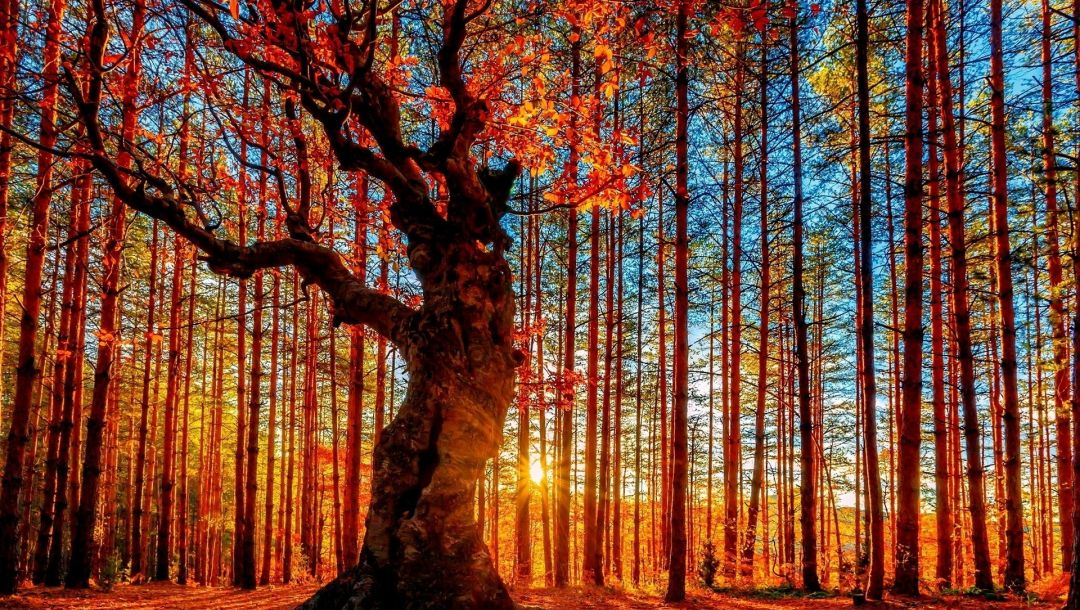 sunlights,autumn,trees,colors,leaves,grass,mountain